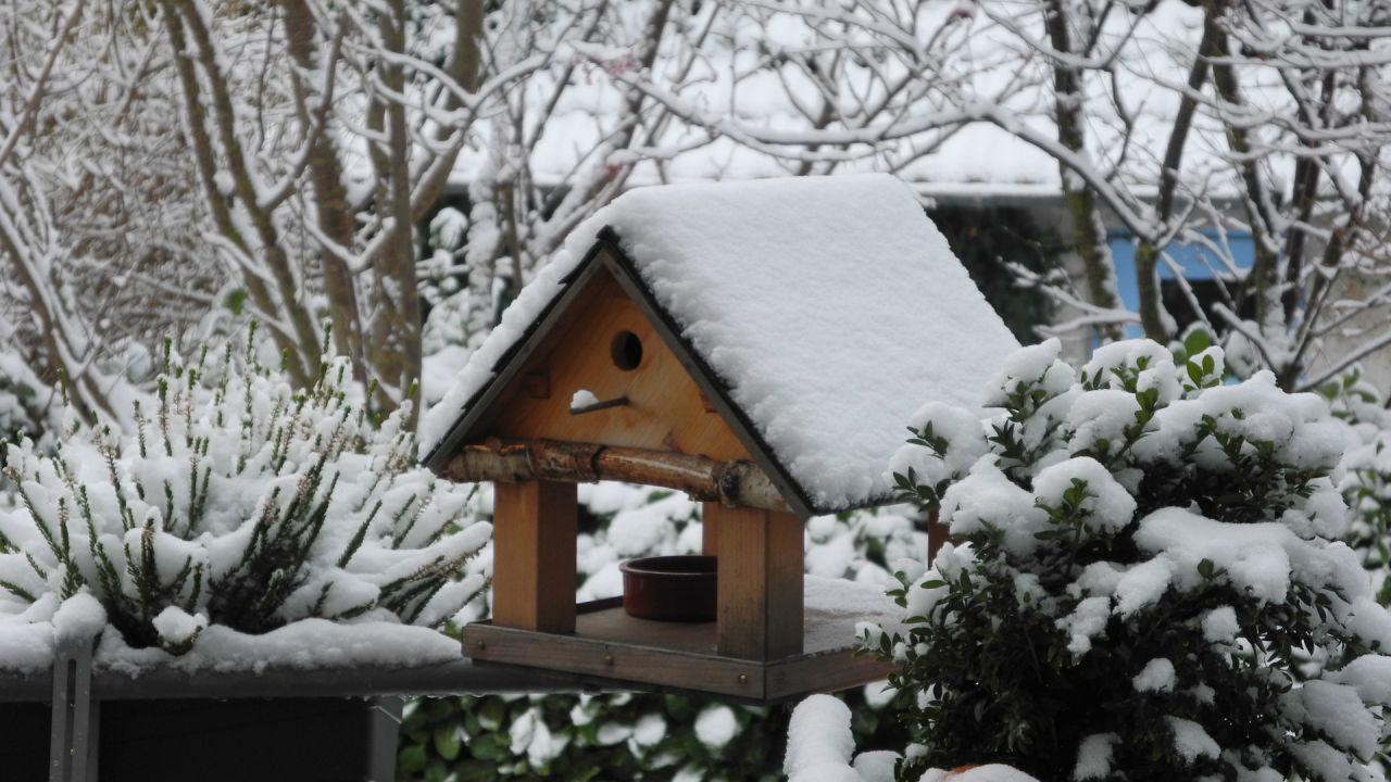 Wintertijd = vogel voedertijd