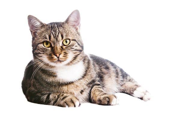DIERENGELUK: Hoe maak ik mijn kat gelukkig?